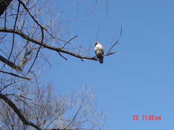 Hawk20002